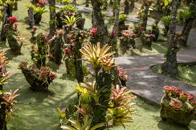 pic of bromeliad  - bromeliad plant in the park in Martinique - JPG