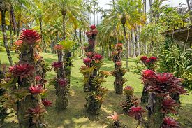 image of bromeliad  - bromeliad plant in the park in Martinique
