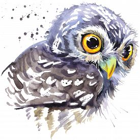 picture of owls  - owl T - JPG