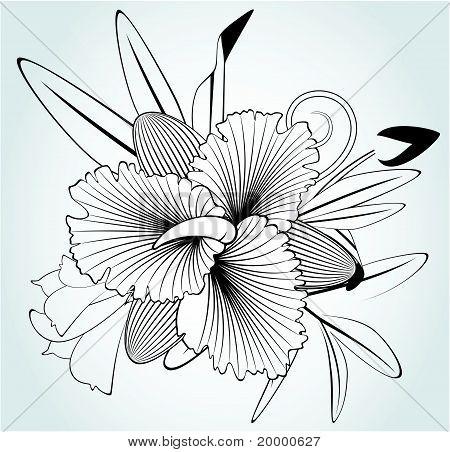 Orchidées de fleurs sur fond blanc pour la conception de