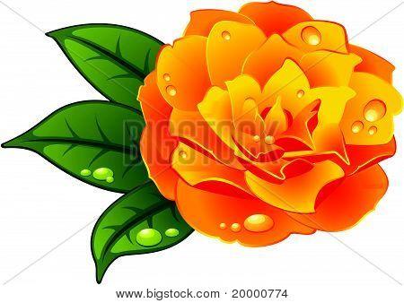 Gelbe Rose mit dem Tau fällt auf weißem Hintergrund