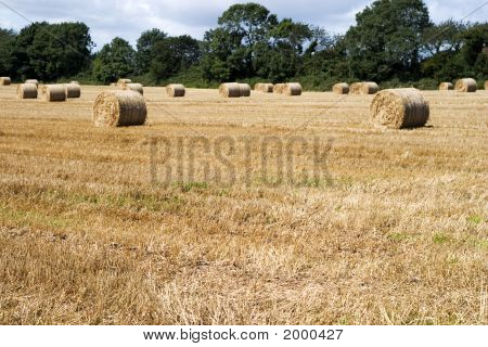 Hay Field And Bales, Ireland