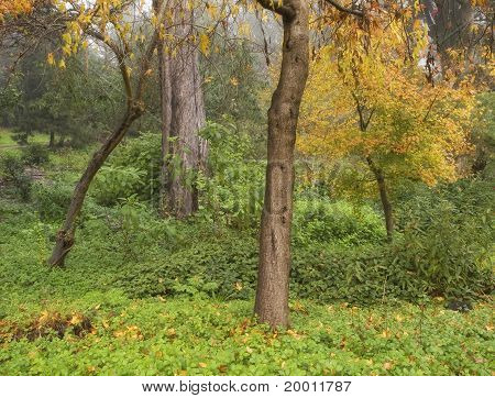 Colorful Forest in Autumn Fog