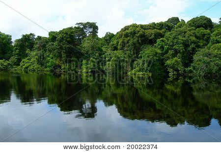 Rainforest in the Amazon River basin in Brazil