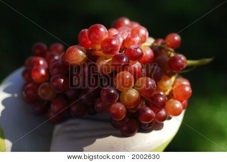 Garden Grapes
