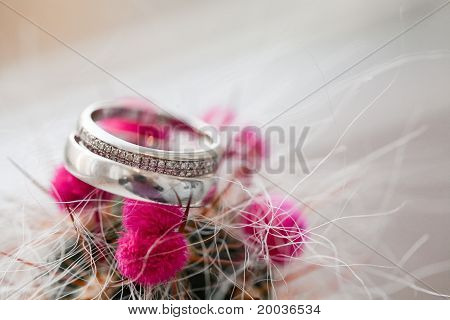 Two Wedding Rings In Cactus
