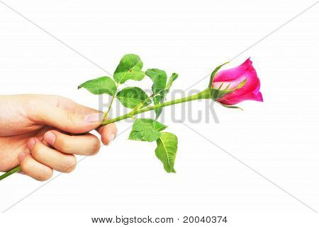 Giving Rose