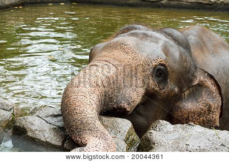 Elephant In The Mud hole