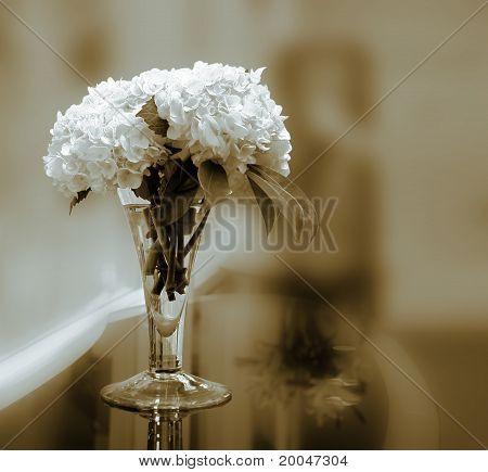 White Hydrengeas in sepia tone