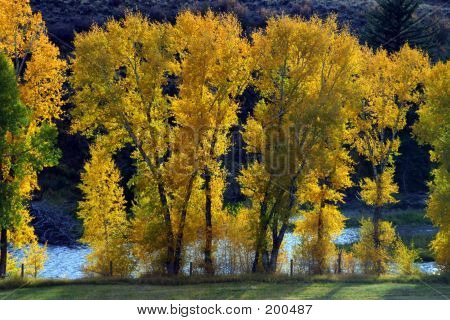 Autumn Trees In Front Of Blue River