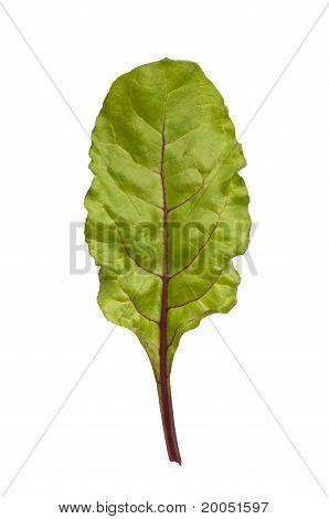 Beetroot leaf