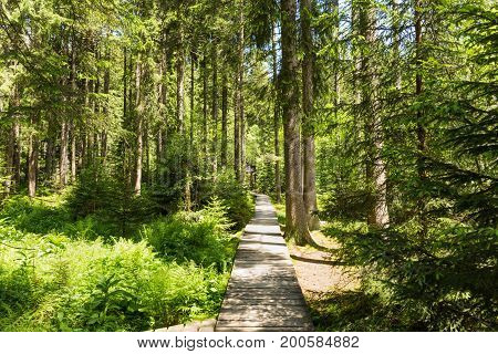 poster of Narrow Path Lit By Soft Spring Sunlight. Forest Spring Nature. Spring Forest Natural Landscape With