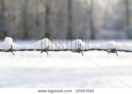 Snow Covered Barbed Wire