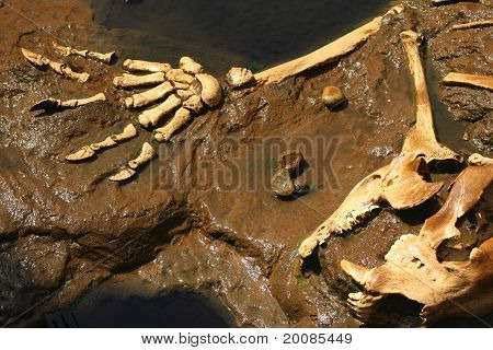 Prehistoric Claws
