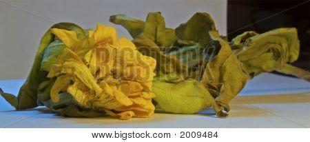 Dead Yellow Flower