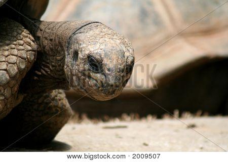 Tortoise Looks At Me
