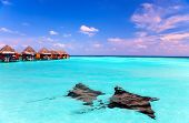 stock photo of guitarfish  - Island in ocean overwater villas and a eagle ray  - JPG