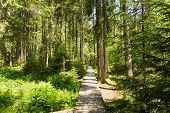 Narrow Path Lit By Soft Spring Sunlight. Forest Spring Nature. Spring Forest Natural Landscape With poster