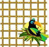 Постер, плакат: Тукан с бамбуковой сеткой