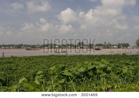 Mekong River In Can Tho, Vietnam