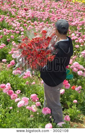 Freshly Harvested Flowers