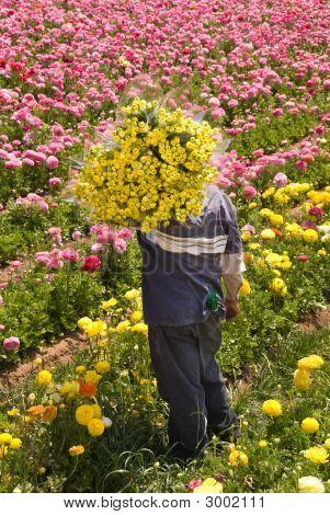 Freshly Harvested Flowers