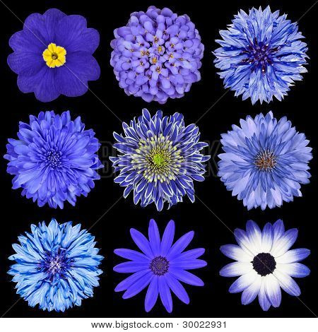 Selection Blue Flowers Selection Isolated On Black