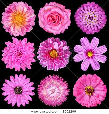 Selection Of Pink White Flowers Isolated On Black
