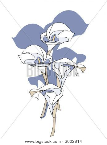 Calla Lily Flowers.Eps