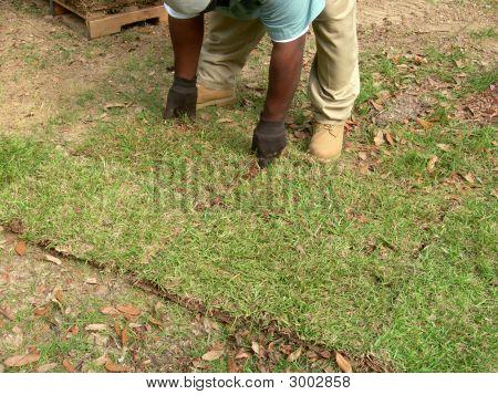 Sodding A Lawn