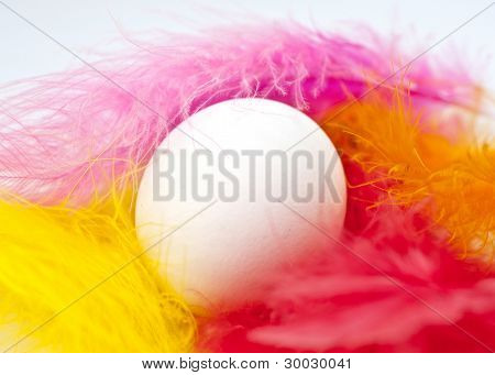 Single Egg Embedded In Colorful Feathers