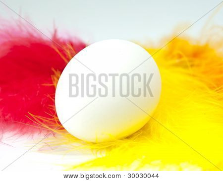 Single Egg With Colorful Red And Yellow Feathers
