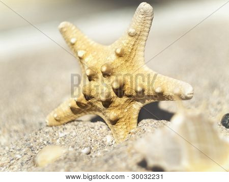 Starfish On A Sandy Shore