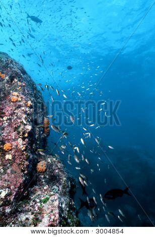 Costa Rica Underwater Wall