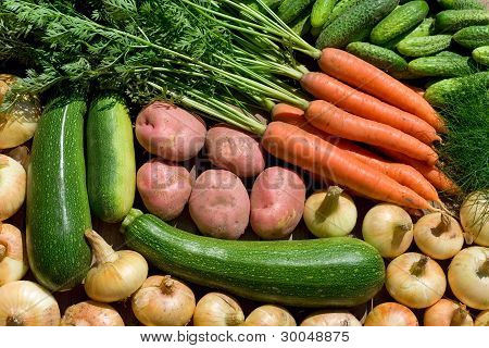 Fresh Homegrown Vegetables
