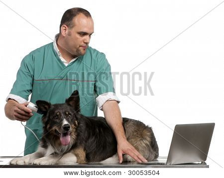Vet examining a Border Collie with a digital otoscope in front of white background