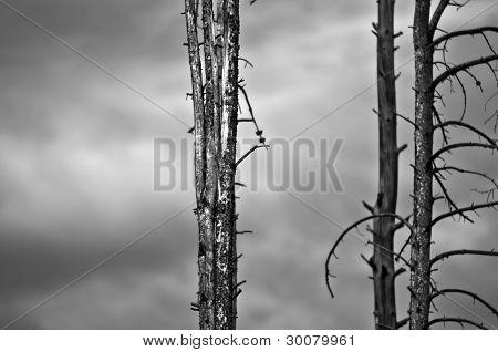 Fallen Trees