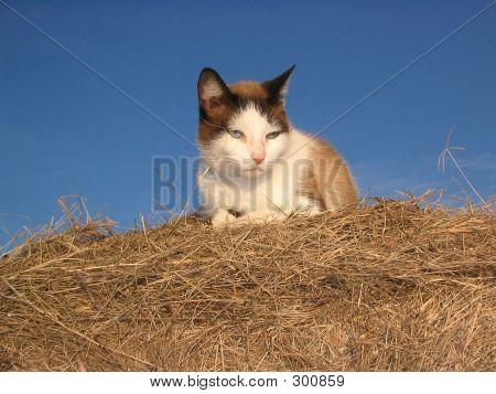 Cat On Hay Bale