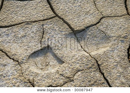 Footprint In Dried Earth