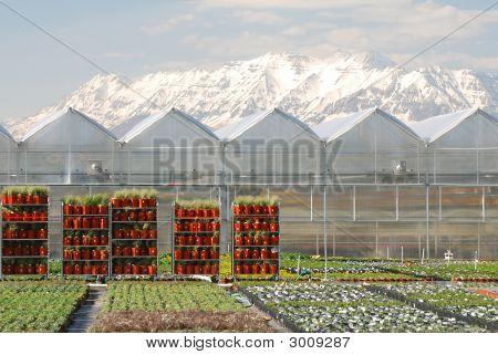 Utah Greenhouses