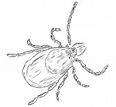 stock photo of dust mites  - House dust mite allergy - JPG