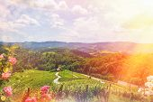 Famous Heart Shaped Wine Road In Slovenia - Austria In Summer, Heart Form - Herzerl Strasse, Vineyar poster