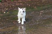 Wet Homeless Sad Kitten On A Street After A Rain. Concept Of Protecting Homeless Animals poster