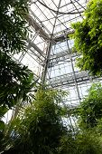 View Of A Tropical Greenhouse With Evergreens On The Background Of A Glass Roof. poster