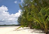 Tropical beach with exotic trees on the sand. Luxury destination. poster