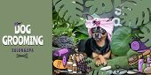Dog Grooming Salon And Spa Poster,  Banner . Photo And Illustration, Cartoon Style.  Dog In A Turban poster