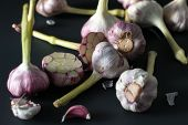 Fresh Garlic. Garlic On A Black Background. Ingredients For Cooking Delicious Food With Garlic. Farm poster