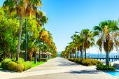 Beautiful Sea Promenade With Palms In Limassol, Cyprus. Summer Landscape. Famous Travel Destination poster
