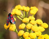 Nature Background Butterfly. Butterfly Insect In Nature. Nature Insect Butterfly On A Flower Plant.  poster