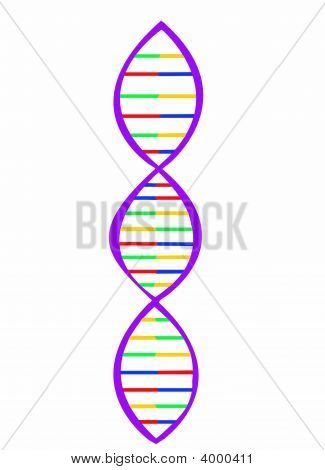 Illustration Of Dna